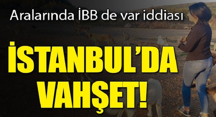 İstanbul'da vahşet! Birbirlerini yiyorlar