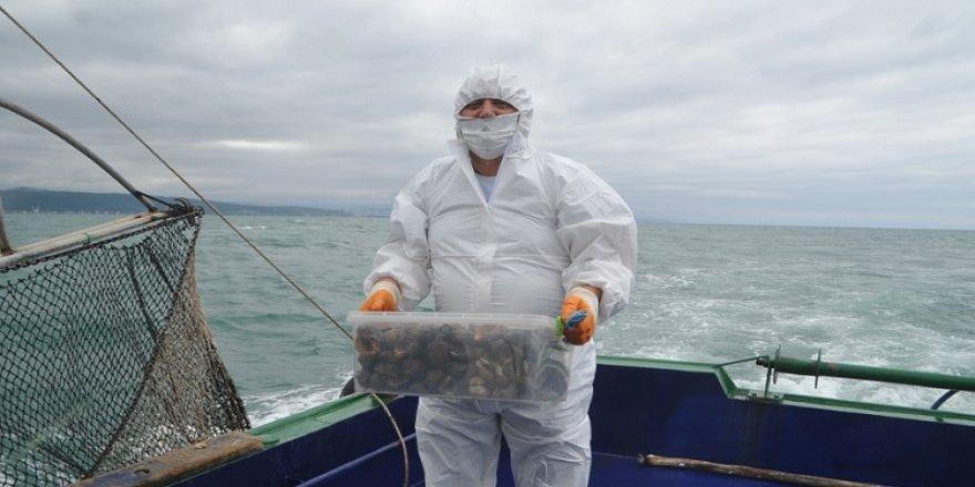 Üniversiteler Karadeniz salyangozunun genetiğini mercek altına aldı