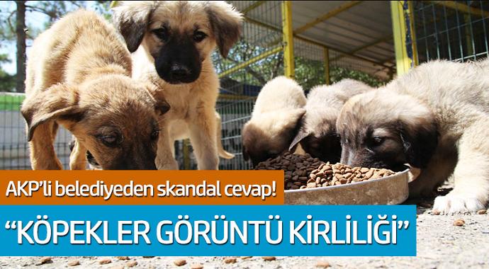 AKP'li belediyeden skandal cevap! 'Köpekler görüntü kirliliği'