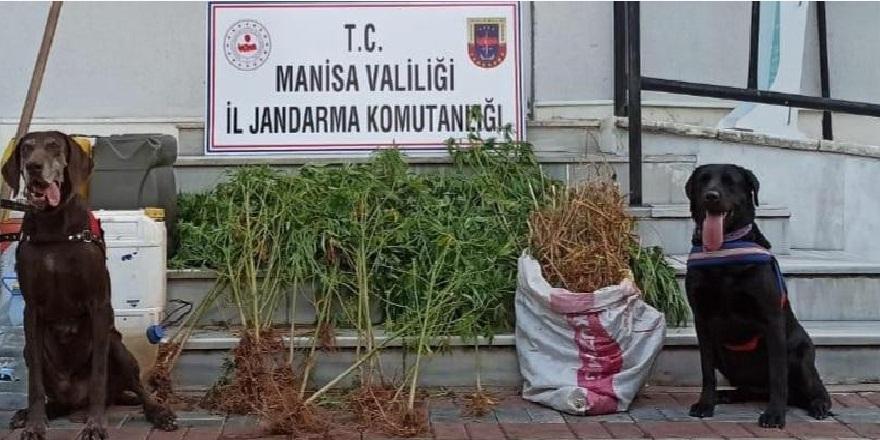 Narkotik köpekleri Manisa'da uyuşturucu çetelerine göz açtırmıyor!