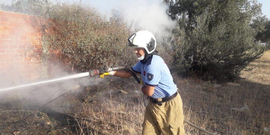 Balıkesir Burhaniye'de ot yangını zeytin ağaçlarına zarar verdi