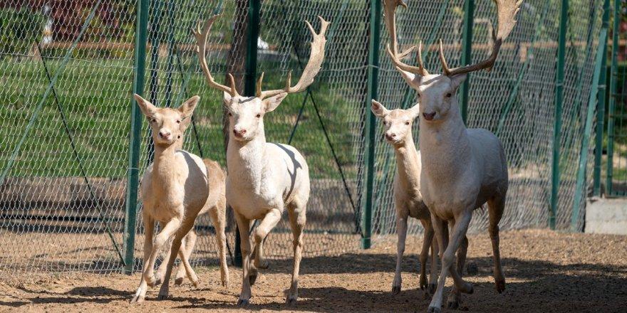 Geçici süre ile kapatılan Malatya hayvanat bahçesi, tekrar açılıyor