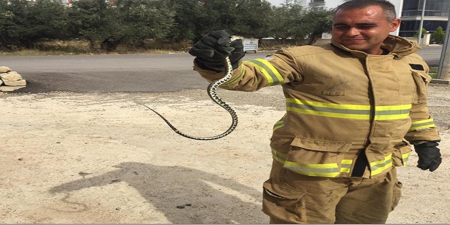 Balıkesir Edremit'te eve giren yılan panik yarattı