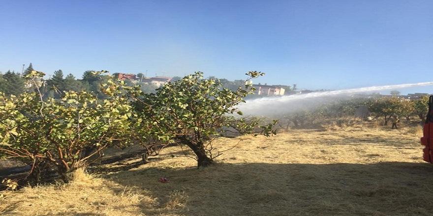 Siirt'te fıstık bahçesinde çıkan yangında pek çok ağaç hasar gördü