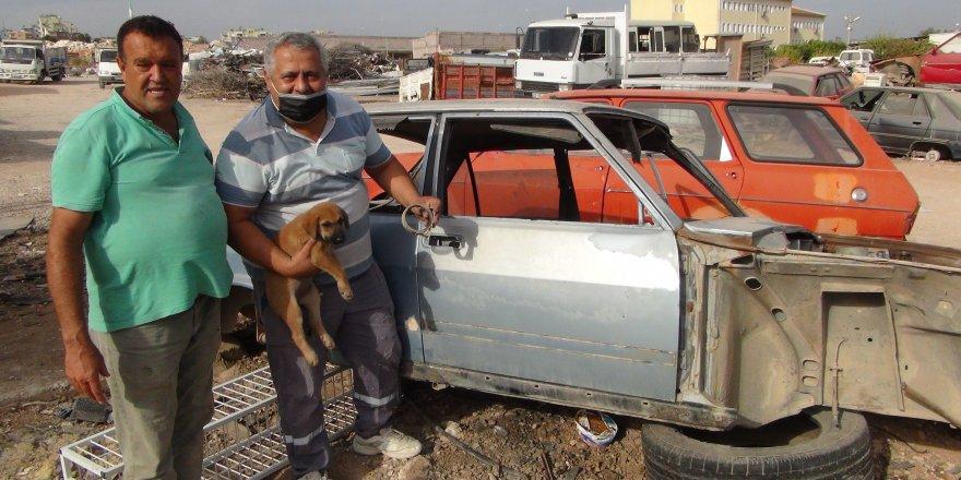 Mersin Silifke'de Kafası sıkışan yavru köpeği sanayi esnafı kurtardı