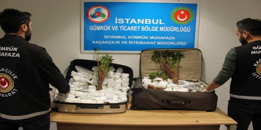 Havalimanı'nda, 8 operasyonda Khat cinsi uyuşturucu ele geçirildi