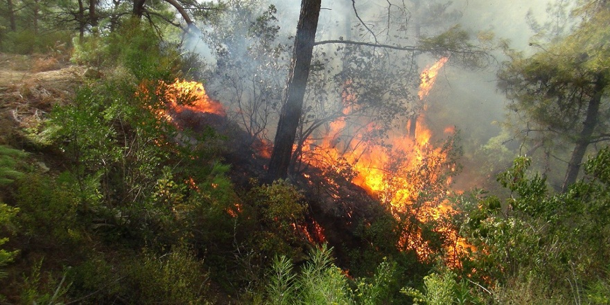 Antalya Manvgat'ta orman yangını!