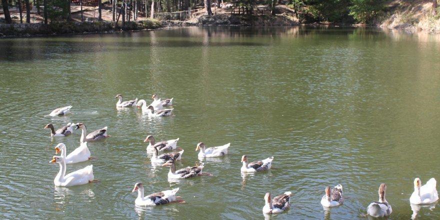 Dipsizgöl Tabiat Parkına, 30 milyon TL'lik yatırım