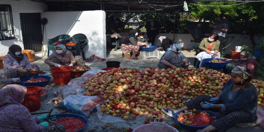 İzmir'de, organik nar ekşisi yapımına başlandı