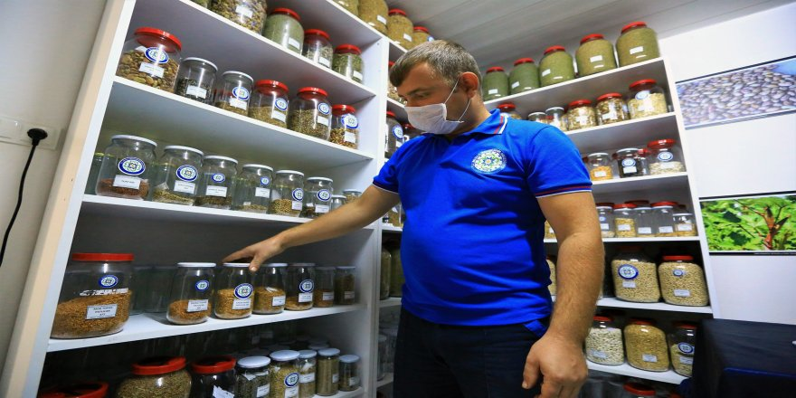5 Milyon 640 Bin yerel tohum, 81 İl'de dağıtımı yapıldı