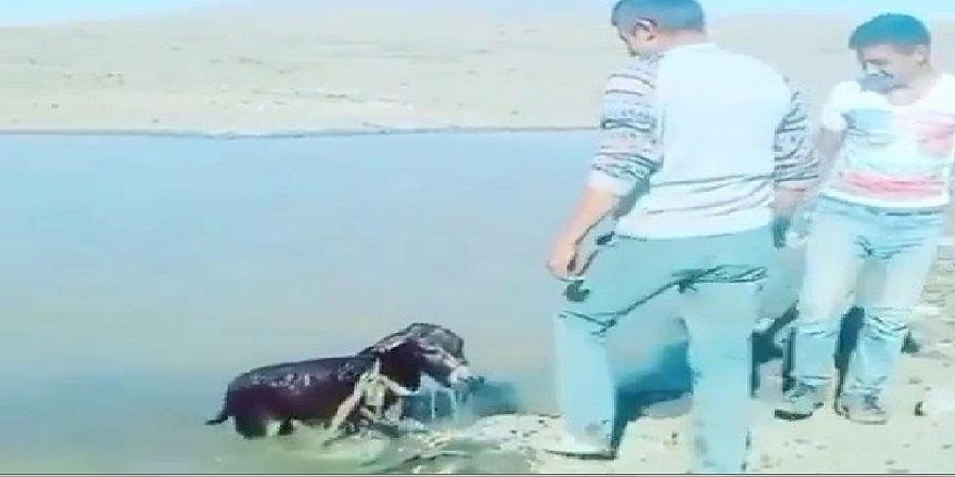 Kars'ta, yavru eşşeğe eziyet eden şahıslara cezai işlem!