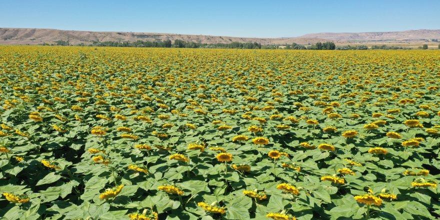 Devlet Su İşleri (DSİ) Genel Müdürlüğü tarafından 2020 yılında, 220 bin dekar tarım arazisi sulandı
