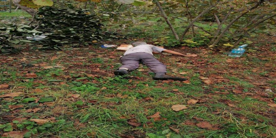 Ordu'da Ağaçtan düşen şahıs yaralandı