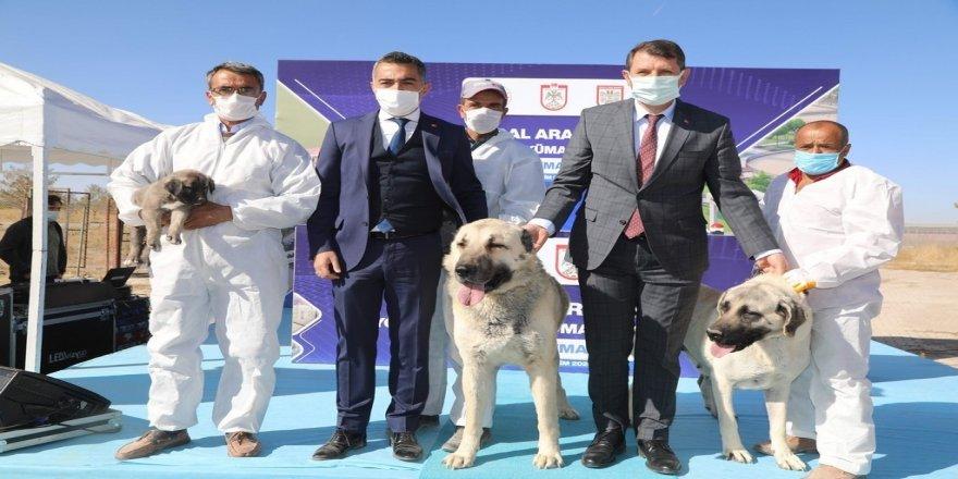 Kangal Köpeği Araştırma ve Dokümantasyon Merkezi'nin temeli törenle atıldı