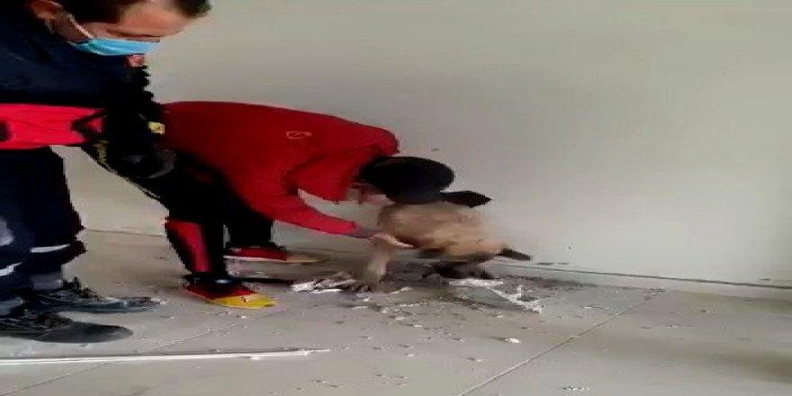 Adıyaman'da Köpek, duvar kırılarak sıkıştığı yerden çıkartıldı