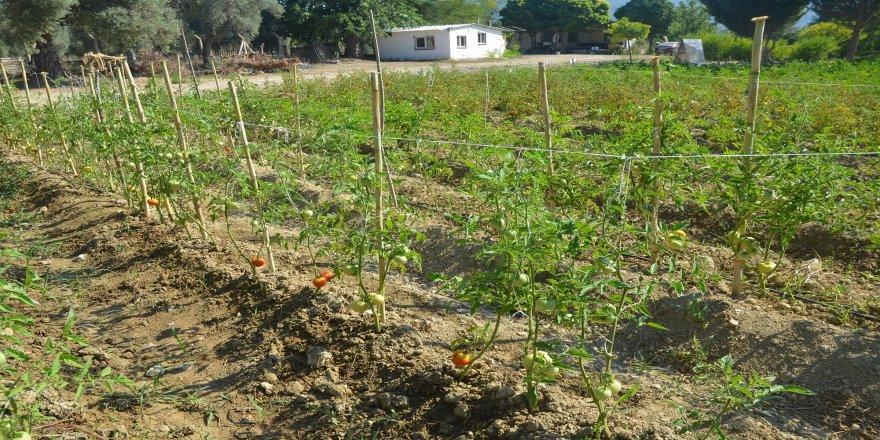 Organik ürünler, Kuşadası'nda yetiştirilip Türkiye'ye açılıyor