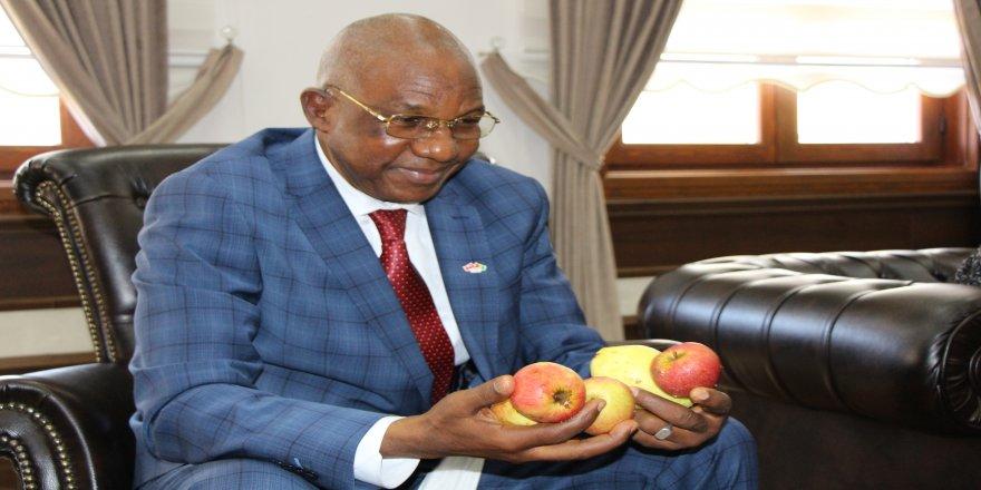 Gine Ticaret Bakanı Balde Mamadou, Amasya elmasını ülkesine götürüyor