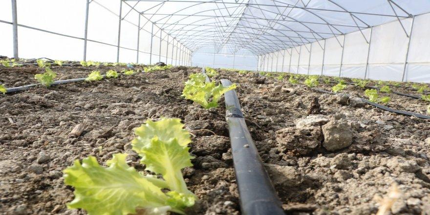 Seracılık projesi Büyükşehir tarafından destekli olup, üretimlere devam ediliyor