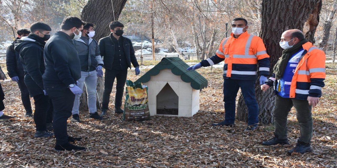 Tatvan Belediye ekiplerinden sokak hayvanlarına kulübe