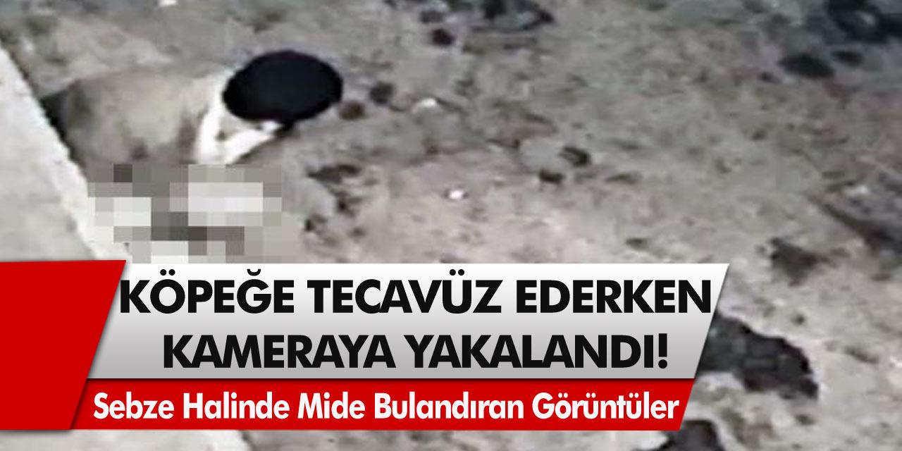 Sebze Halinde Mide Bulandıran Olay! Güvenlik Kamerasına Köpeğe Tecavüz Ederken Yakalandı, Görenin Midesi Bulandı!