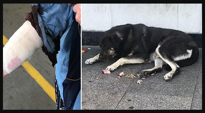 Taksim'de Köpek Dehşeti!