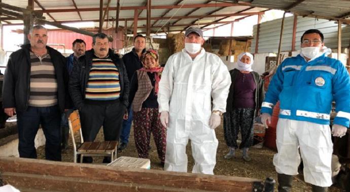 Milas'ta Tarım ve Orman Bakanlığı aşılama çalışmalarına devam ediyor